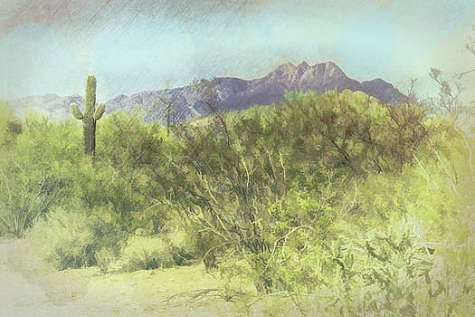 Grace Dillon - Tonto National Forest