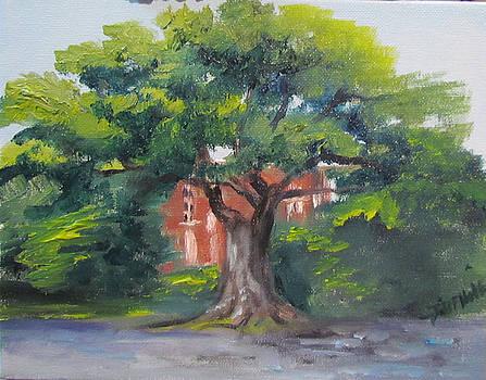 Toomer's Tree by Jill Holt