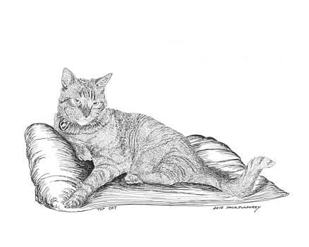 Jack Pumphrey - Top Cat
