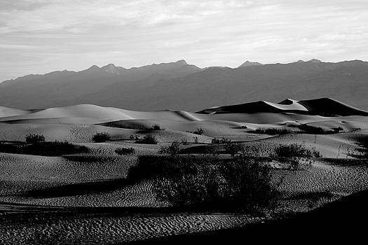 Top of the Dunes, Death Valley by Erica Keener