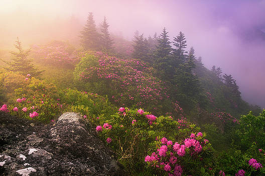 Top of the Mornin' by Dawnfire Photography