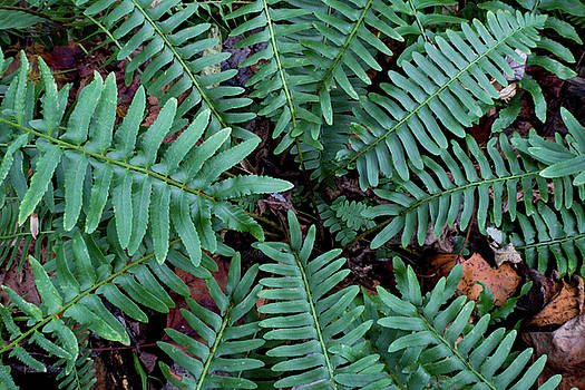 Top view of a green fern plant by Natalie Schorr
