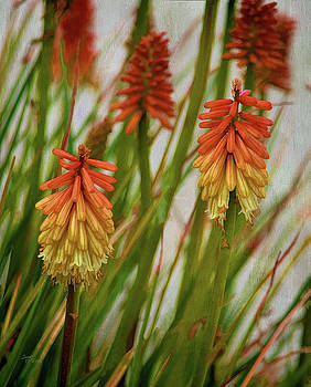 Torch Lily At The Beach by Sandi OReilly
