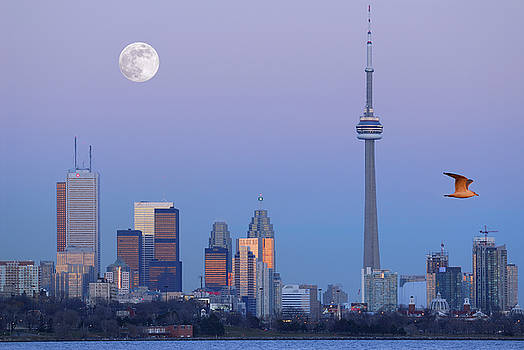 Reimar Gaertner - Toronto city skyline at dusk with moon and seagull