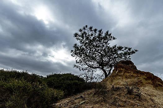 Guy Shultz - Torrey Pine