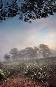 Torrey Pines Foggy Sunrise by William Dunigan