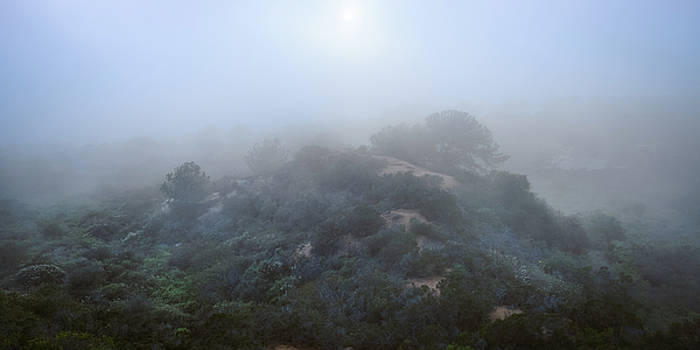 Torrey Pines - Shrouded Knoll by Alexander Kunz
