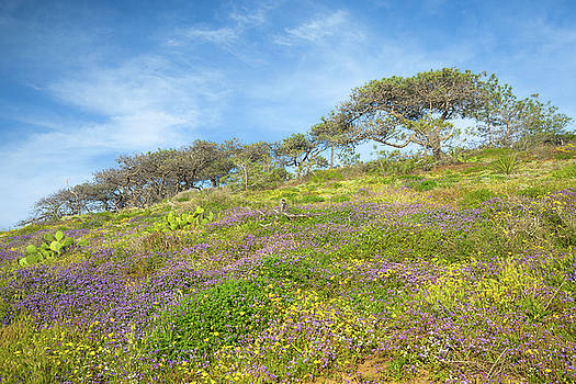 Torrey Pines Wildflower Bloom by Alexander Kunz