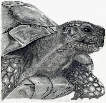 Tortoise by Praveen Akkivalli