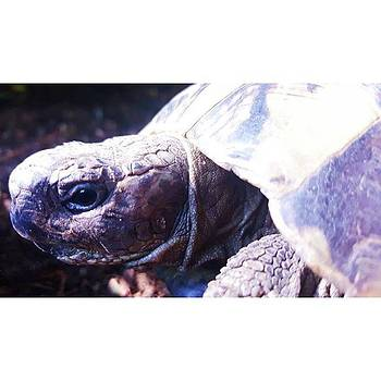 #tortoise #torts #sunbathing #basking by Natalie Anne