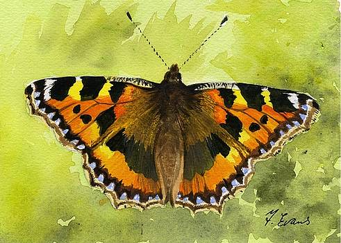 Tortoiseshell Butterfly by Frances Evans