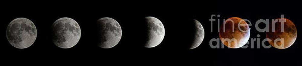 Total Lunar Eclipse - 2015-September 28 by Robert McAlpine