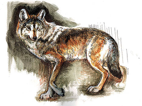 Totem Mexican Wolf  Watercolors by Belette Le Pink