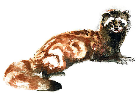 Totem Vormela Polecat by Belette Le Pink