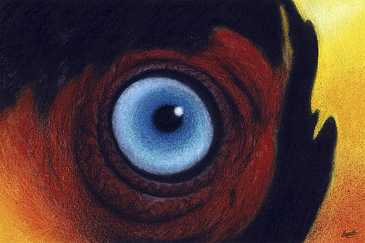Toucan Eye by Enaile D Siffert