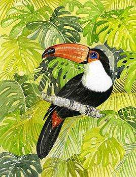 Toucan in Jungle by Frances Evans