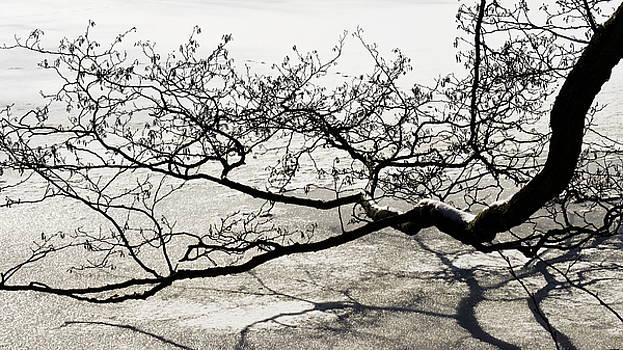 Angela Doelling AD DESIGN Photo and PhotoArt - Wonderful tree