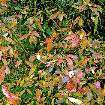 Touch of Autumn by Anne Kotan