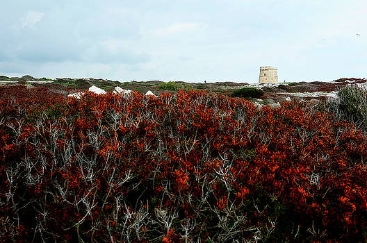 Pedro Cardona Llambias - Tower in red landscape