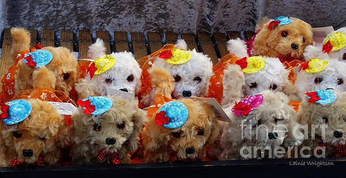 Toy Puppy Line-up by Lainie Wrightson