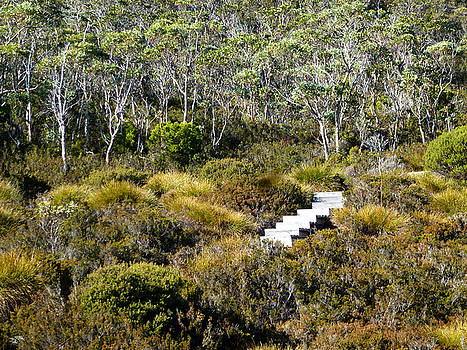 Track at Cradle Mountain by Sarah King
