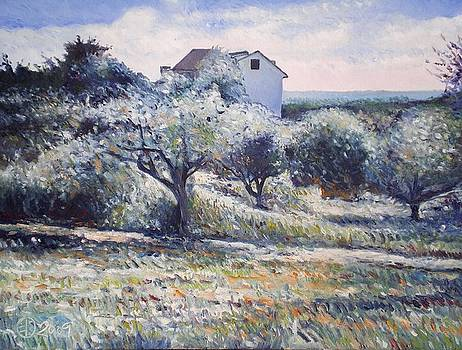 Track leading alongside orchard with farmhouse near Monte Cardeto Italy 2009 by Enver Larney