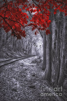 Tracks Through The Forest by Tom York Images
