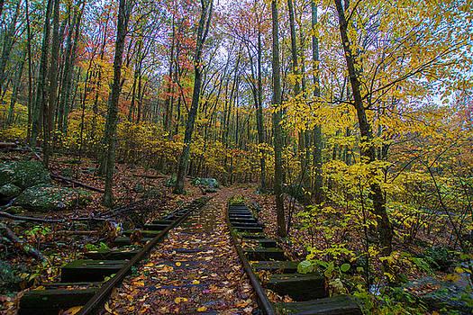 Tracks Through the Woods by Steve Hammer