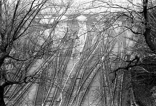 Tracks through Trees by John Rowe