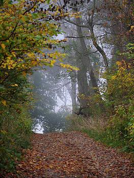 Trail in Morning Mist by Paul Ross