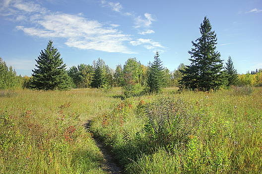 Trail in September Meadow by Jim Sauchyn