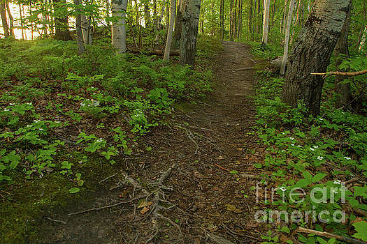 Trail in the Woods by Denise Lilly