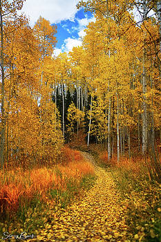 Trail of Colors by Stacy Burk