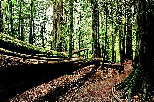 Trail Of the Fallen Giants of Cathedral Grove by Brian Sereda