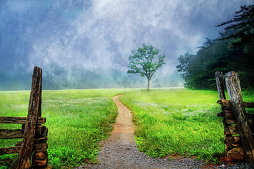 Trail on a Misty Morn by Debra and Dave Vanderlaan