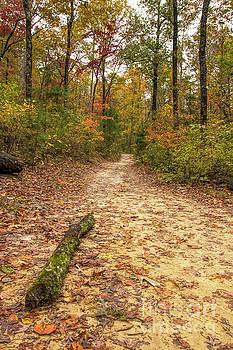 Barbara Bowen - Trail to Benton Falls