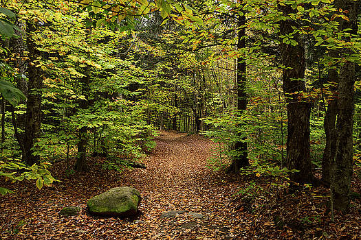 Reimar Gaertner - Trail to Bingham Falls Stowe Vermont with fallen leaves in the w