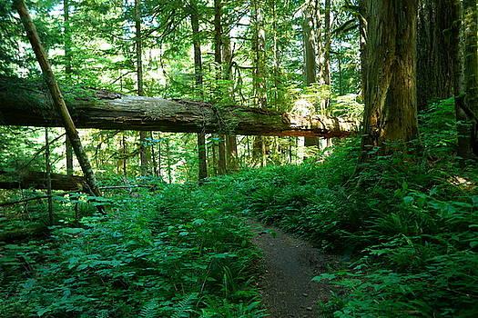 Trail towards Green Lake by Jeff Swan