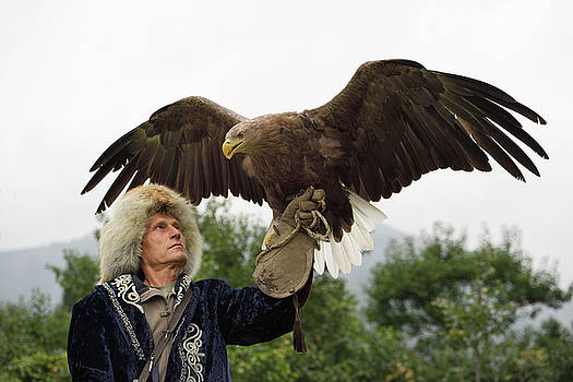 Reimar Gaertner - Trainer holding a White Tailed Eagle up with spread wings at Sun