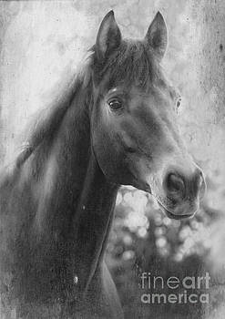 Trakehner by Clare Bevan