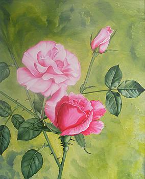 Trandafiri by Costin Cristian Augustin