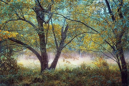 Tranquil Dream by John Rivera