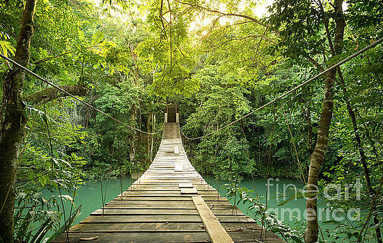 Tranquil Forest Footbridge by Tim Hester