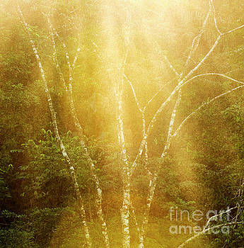 Tranquil Forest Tree Background by Tim Hester