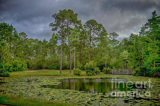Tranquil Pond by Judy Hall-Folde