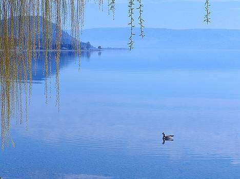 Tranquil Solitude by Mansour Zadrafie