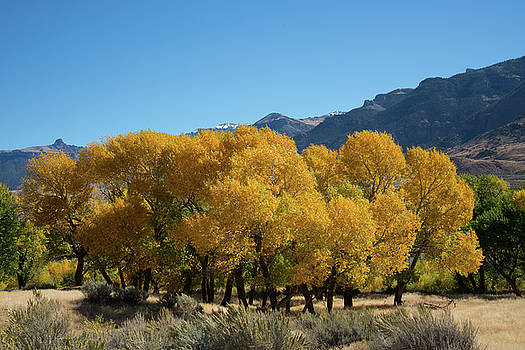 Tranquility in Golds and Yellows by Frank Madia