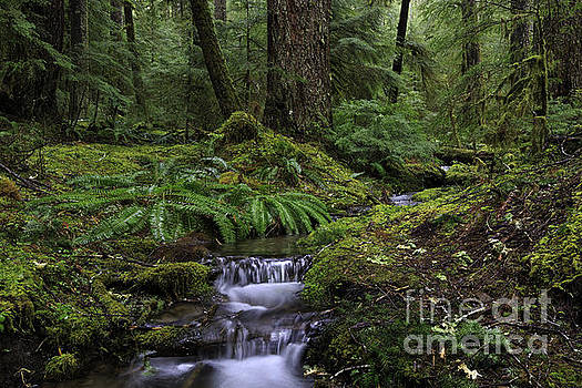 Tranquility in the forest by Tim Hauf