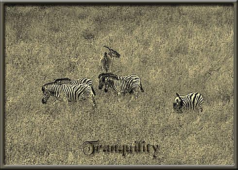 Damara Zebra - Tranquility by Patricia Whitaker