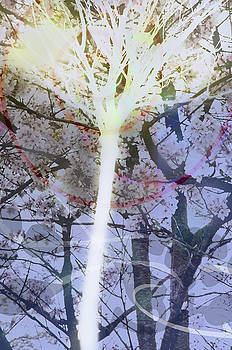 Affini Woodley - Transfiguration